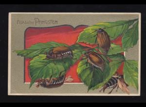 Tiere-AK Pfingsten Fünf Maikäfer mit Zweig, BRAMSCHE (BZ. OSNABRÜCK) 10.5.1913
