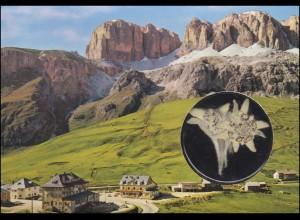 Italien-AK Dolomiten Pordoipaß mit echtem Edelweiß, Lokal-Stempel, ungebraucht