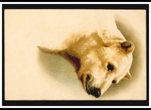 Prägekarte Tiere Der Eisbär, um 1910, ungebraucht