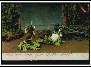 AK Ostern: Osterhasen beim Blumenkohlessen, FLORIDSDOEF 22.2.1905