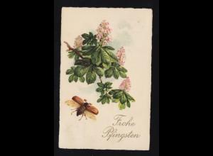 Tiere-AK Pfingsten Fliegender Maikäfer mit blühender Kastanie, LÜBECK 4.6.1927