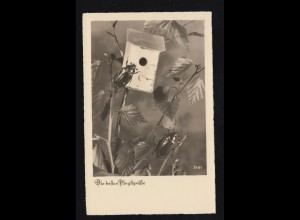 Foto-AK Tiere: Pfingsten - Zwei Maikäfer mit Insektenhäuschen, 10.5.1940