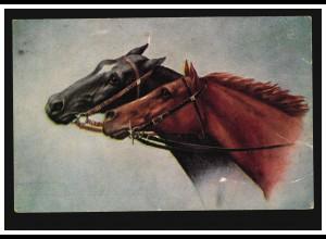 Tiere-AK Zwei Pferdeköpfe - Brauner und Rappe, ungebraucht, um 1920