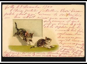 Schweiz Tier-AK Spielende Katzenkinder, GILLY / VAUD 24.12.1900 nach GENF 24.12.
