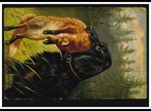 Tiere-AK Hund apportiert erlegten Fuchs, HANNOVER 26.9.1918