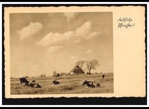 Foto-AK Landschaftsbild mit Kühen und Bauernhaus, EINSWARDEN (OLDENBURG) 30.5.41