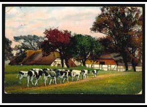 AK Rinderherde - Zurück zum Bauernhof, LAMPERTHEIM um 1913