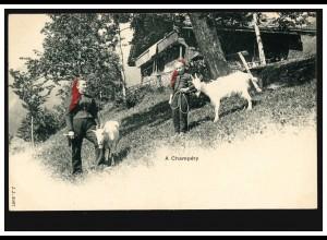 Schweiz AK A Champery: Bauernhof mit Ziegen, coloriert, ungebraucht, um 1910