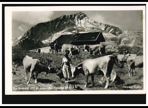 AK Die Hochalm (1705 m) gegen die Alpspitze (2628 m) mit Almhütte und Rindern