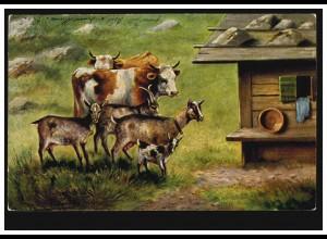 Künstler-AK Rinder und Ziegen auf der Alm, TROGEN 4.6.1904 nach HERISAU 4.6.04