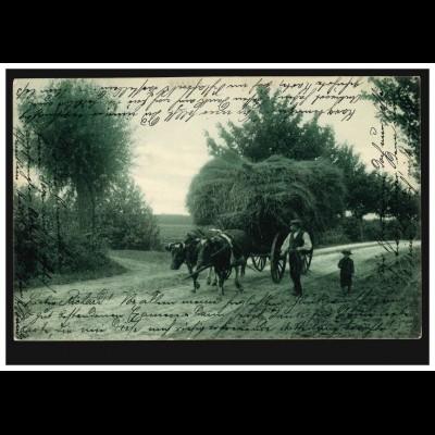 AK Ochsengespann mit vollem Wagen, HAMBURG 1a 14.3.1905 nach ALTENBURG 13.3.05