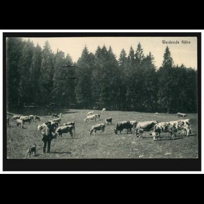 Foto-AK Tiere: Weidende Kühe, FINSTERBERGEN (HZGT. GOTHA) 20.3.1912