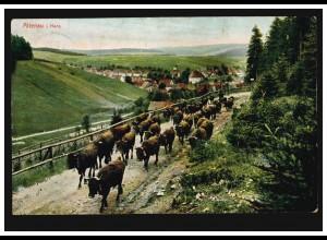 AK Altenau im Harz: Panorama mit Rinderherde - Viehauftrieb, CLAUSTHAL 1907