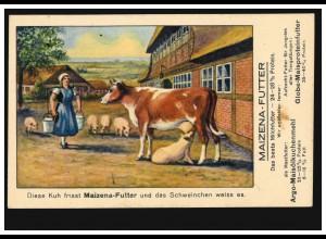 Werbe-AK für Maizena-Futter: Schwein saugt an der Kuh, BONN 3.6.1926