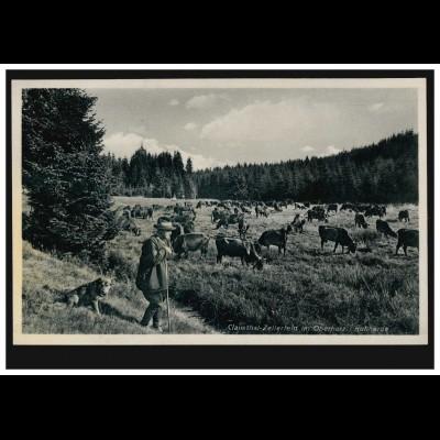 Foto-AK Clausthal-Zellerfeld im Oberharz: Kuhherde, ungebraucht