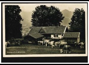 Foto-AK Schwaigeralm bei Birkenstein mit Rinderherde, FISCHBACH 11.8.1932