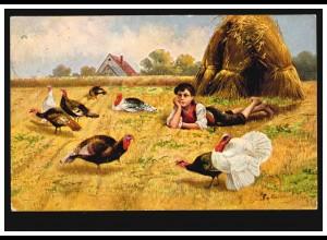 Tiere-AK Geflügel Truthahn / Pute auf dem Feld, FRANKFURT / MAIN 15.10.1907