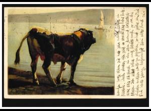 Künstler-AK Rudolf Koller: Studie Schwarzfleck-Stier, GENF 13.12.1922
