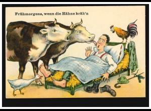 Humor-AK Frühmorgens, wenn die Hähne kräh'n Kühe wecken Schlafenden, ungebraucht