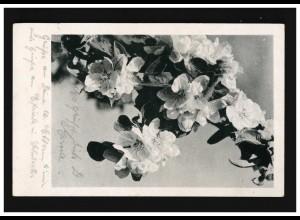AK Blumen Baum Zweig Blüten Knospen, gelaufen 11.7.1944