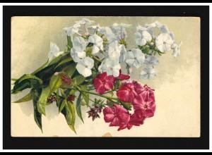 AK Blumen Stilleben rot weiss Blüten Zweige Stauden-Phlox, Meschede 29.11.1924