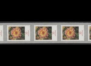 2514 Dahlie 35 Cent 2006 sk 5er-Streifen aus 10000er, GERADE Nummer **