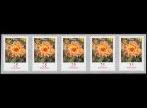 2514 Dahlie 35 Cent 2018 sk 5er-Streifen aus 10000er GERADE Nummer **