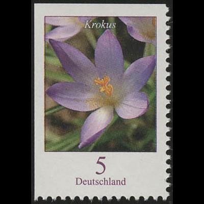 2480Eo Blumen 5 C Elfenkrokus, links und oben geschnitten, **