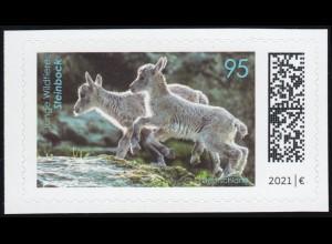 3629 Junge Wildtiere: Steinbock, selbstklebend aus FB 109, ** postfrisch